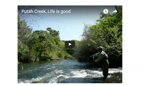 Putah Creek, Life is good